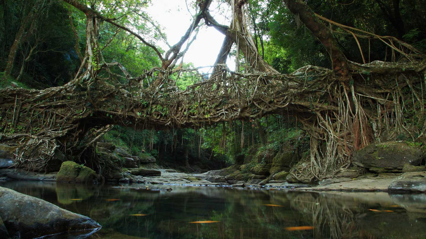 Meghalaya: Nature's best kept secret